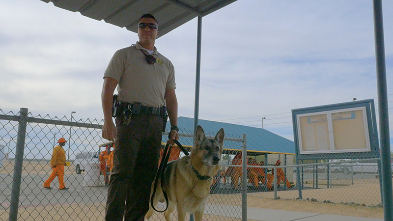K9 Officer in Prison Yard