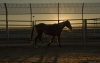 Horse at Sunset in Florence AZ